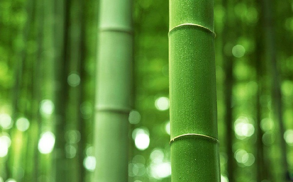 The story of the Bamboo Tree